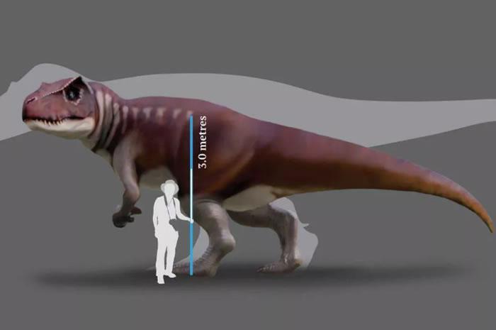 新研究通过昆士兰煤矿中发现的足迹化石确定在澳大利亚发现最大的肉食性恐龙