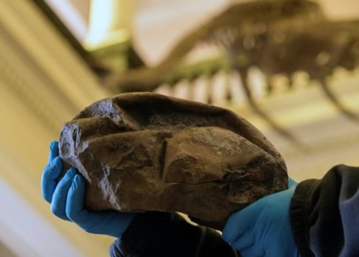 南极洲西摩岛发现的神秘化石证属已灭绝海洋爬
