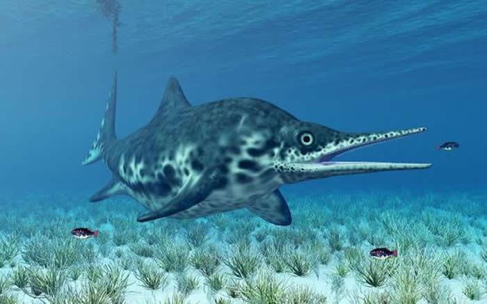 鱼龙是一种生活在恐龙时代的海洋爬行动物,现早已灭绝消失,它看上去像凶猛的巨型海豚,美国内华达州发现的是迄今为止第二古老的怀胎鱼龙化石。