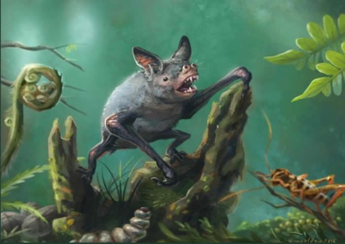 5220万年前蝙蝠的祖先为树栖 3000多万年前进化出回声定位技能
