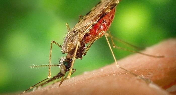 俄罗斯科学家称对疟蚊无需恐慌