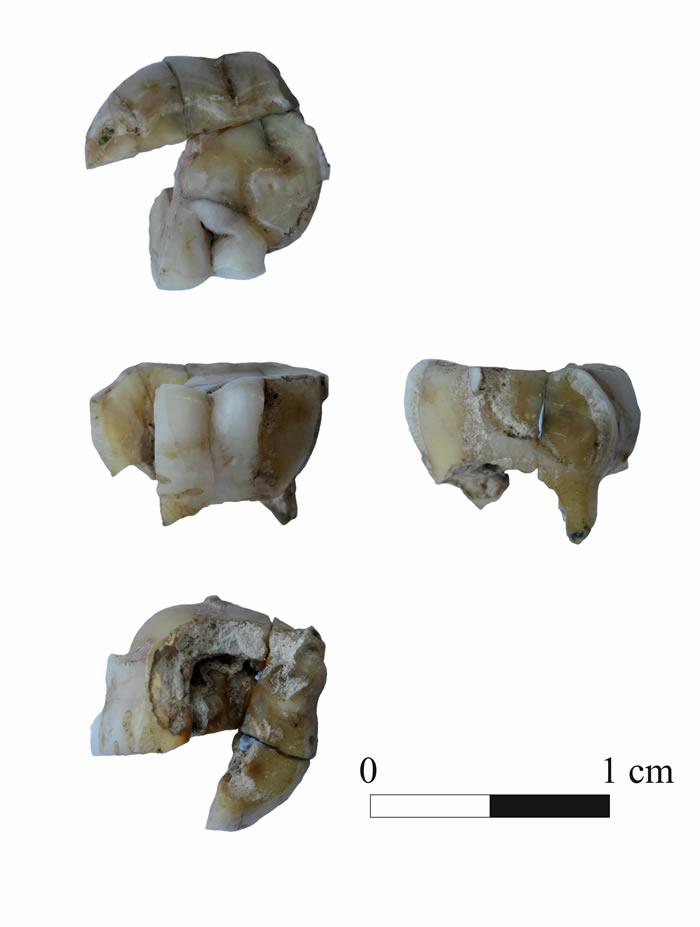 """Ust-Kyakhta-3""发现的人类牙齿化石"