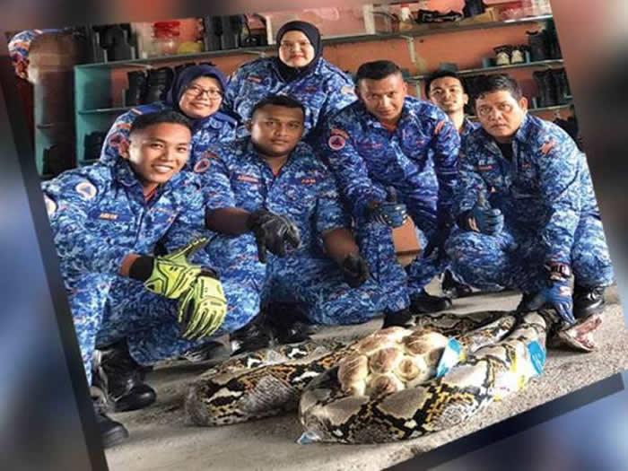 马来西亚男子在打扫自家后院时发现长达5公尺的大蟒蛇 蛇洞内还有50颗蛇蛋