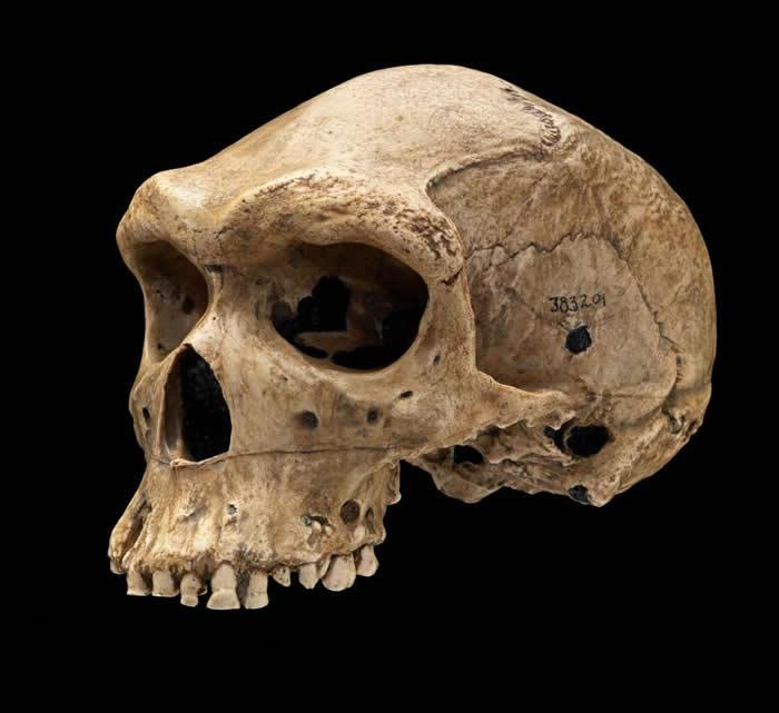 美国阿肯色大学古生物学家:人类的牙齿为何如此脆弱