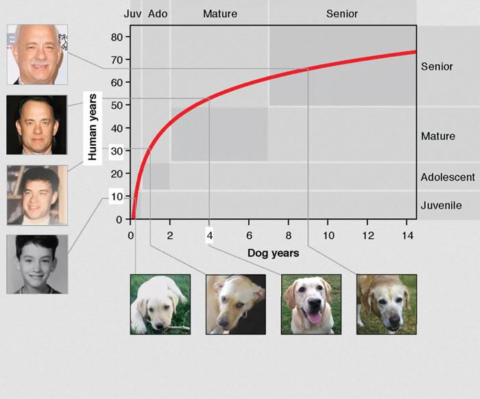 """美国研究人员想出计算狗生理年龄的精确公式 取代""""狗的一年等于人的七年""""的计算方法"""