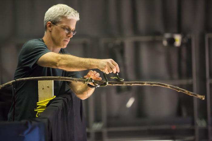 树蛇或天堂金花蛇可以滑翔10米以上的距离 飞行时使用怎样的空气动力学原理