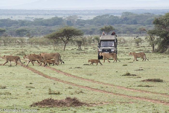 保育是新的商业模式 肯尼亚马赛地主:我的土地已属于大象、牛羚和狮子们