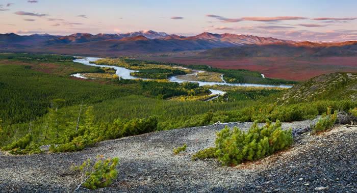"""俄罗斯萨哈(雅库特)共和国将建立""""熊岛""""自然保护区"""