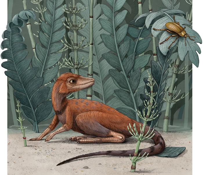 马达加斯加2.37亿年前的爬行动物Kongonaphon kely可能为恐龙的起源提供线索