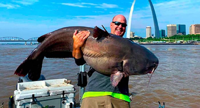 美国密苏里州圣路易斯市两名钓鱼爱好者合力将重达50.8公斤蓝鲶鱼从密西西比河中捞出