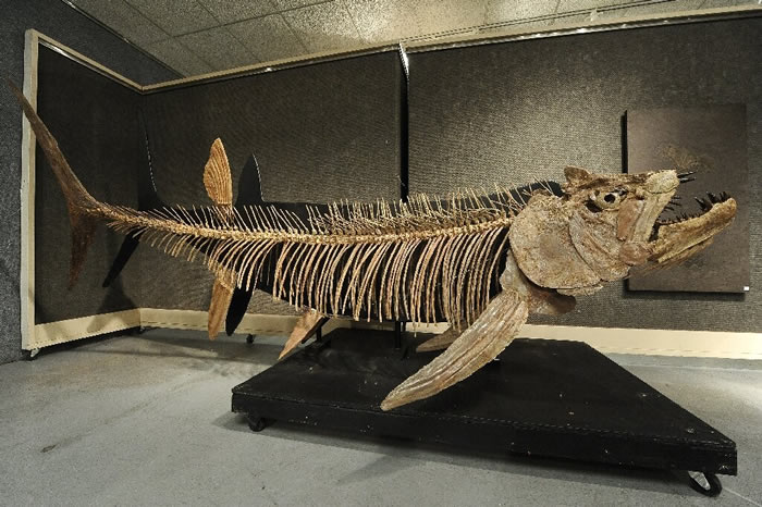 在美国堪萨斯州发现的化石,类似于在阿根廷这次发现的掠食性鱼类化石。