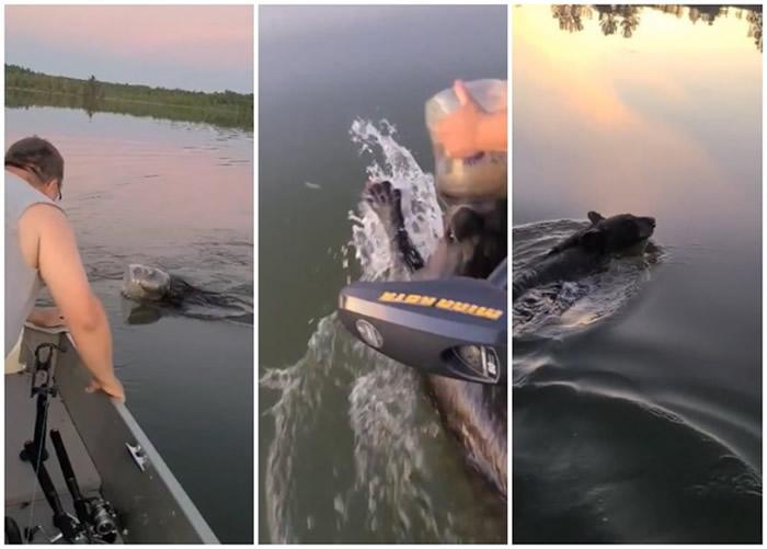 美国威斯康辛州小黑熊头卡胶桶湖中浮沉 家庭合力拯救终脱险