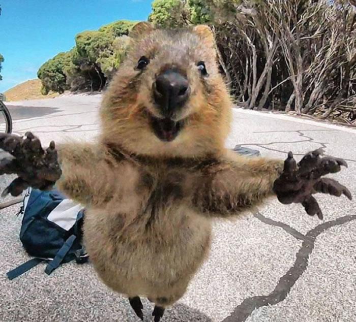 """""""世界上最幸福动物""""短尾矮袋鼠在日本埼玉县儿童动物自然公园亮相"""