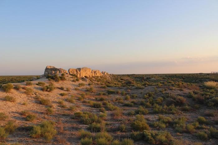 哈萨克斯坦南部古丝绸之路沿线发掘过程中发现逾千年历史完整猫咪骨骼