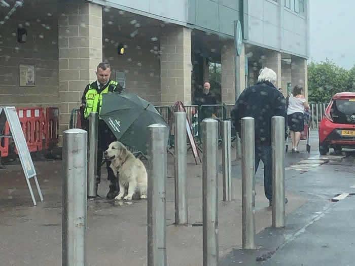 英国连锁莫里森超市门外黄金猎犬固执冒雨等主人 警卫为它撑伞自己淋雨