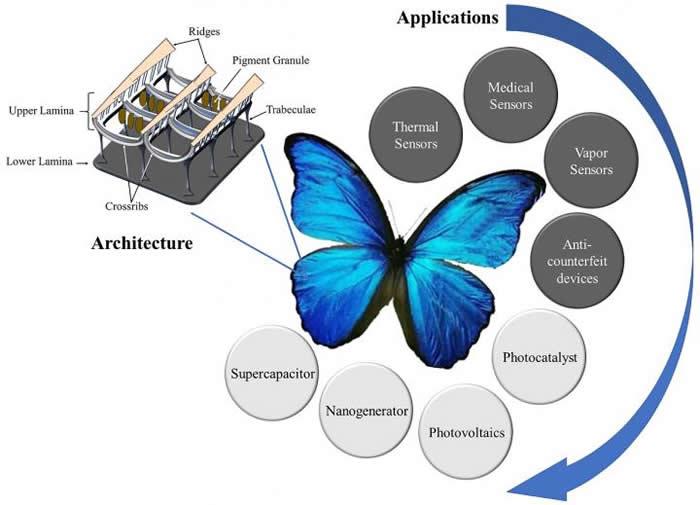 启迪于蝴蝶鳞片构型的功能材料