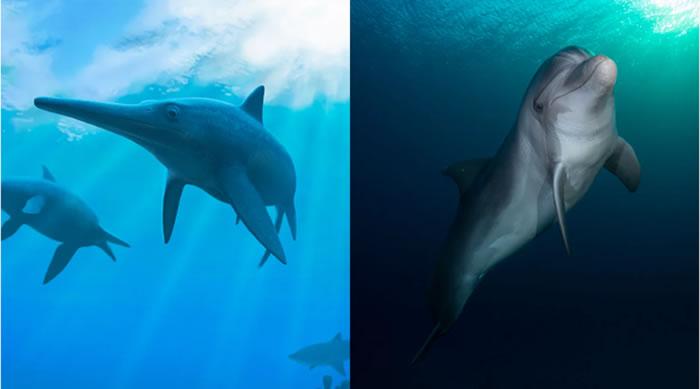 海豚和鱼龙