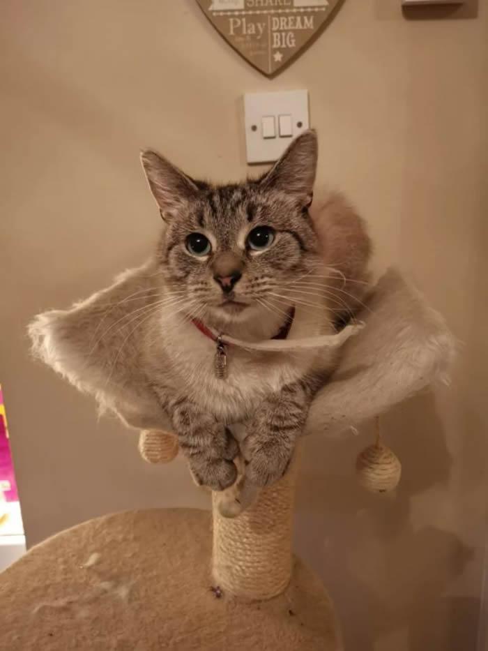 英国威尔士南部小镇一只小猫回到家时颈圈贴着带有威胁语气的字条