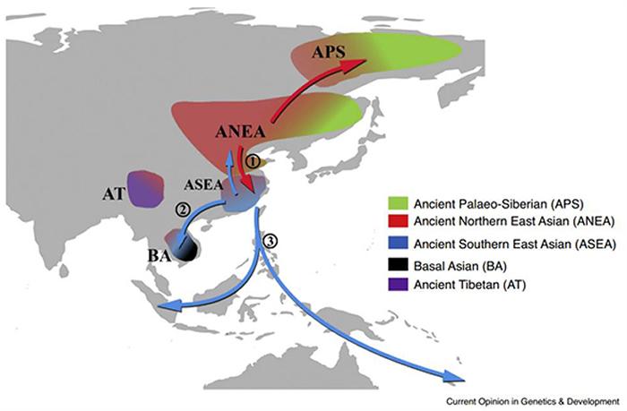 欧亚大陆全新世与遗传证据相关的主要人群迁徙情况