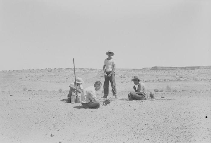 这张照片拍摄于1942年的发掘现场,当时加州大学柏克莱分校的科学家正在发掘一副双脊龙化石。 UNIVERSITY OF CALIFORNIA MUSEUM OF