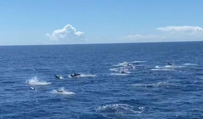 """台湾宜兰网红景点""""牛奶海域""""出现上千只海豚连线1公里跃出水面的壮观奇景"""
