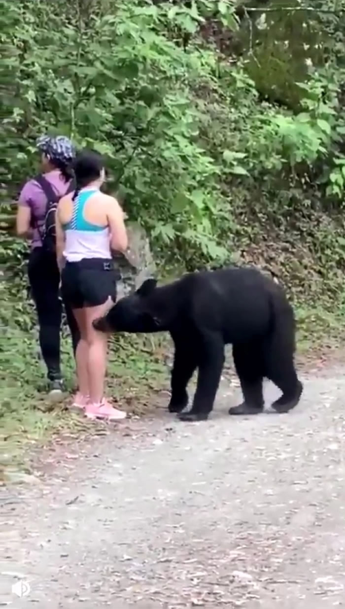 之前3名女子在登山时巧遇一只好奇黑熊,黑熊一度抓了其中一人的后腿、闻头发,影片震撼全球