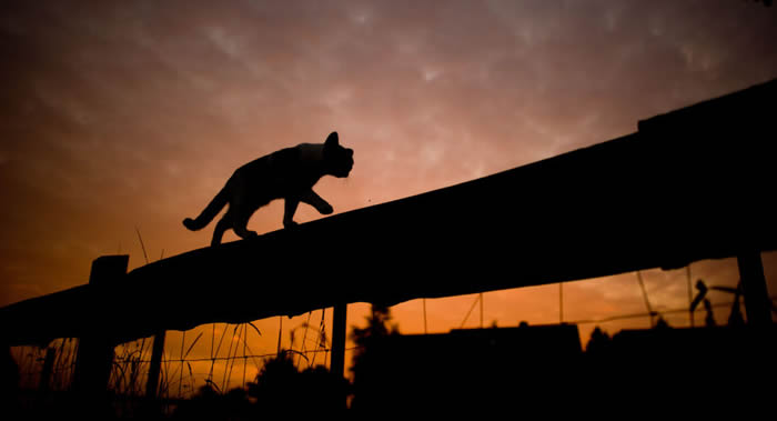 英国猫咪加菲尔德长途跋涉64公里返回主人身旁