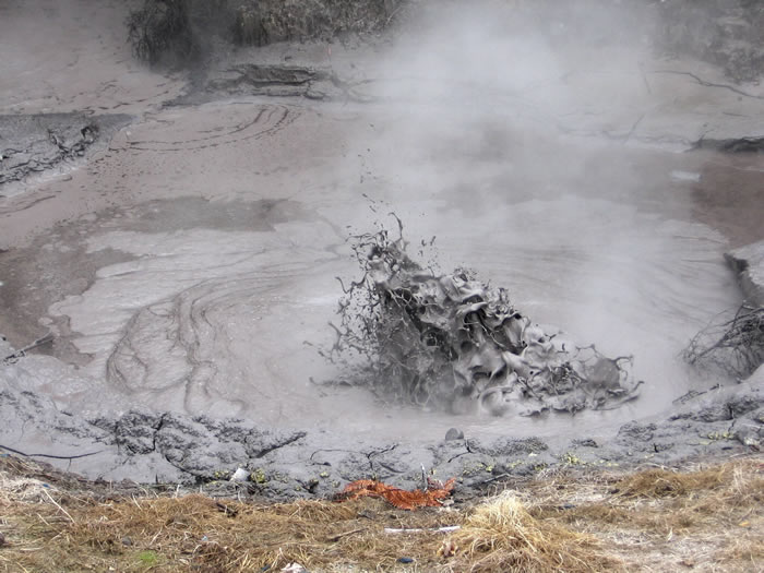 Sulfolobus acidocaldarius在新西兰这样的地热泥池中茁壮成长