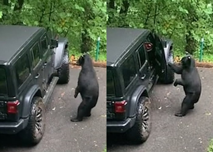 美国田纳西州男子发现黑熊竟开门想上他的车 用训斥小孩口吻喝退