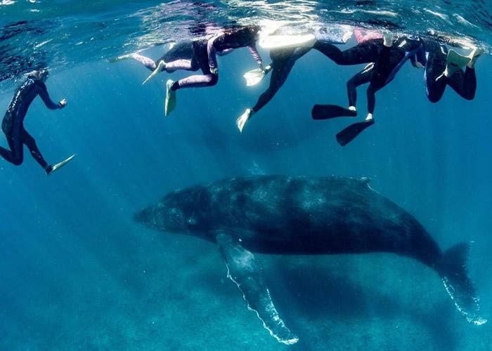 澳洲西澳省浮潜罕见意外 女游客遭座头鲸尾巴击中重伤