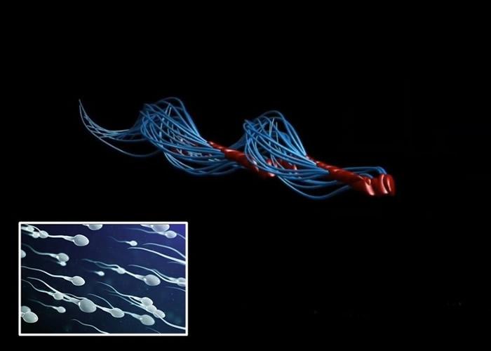 英国科学家研究揭人类精子真正游动方式 打破300多年来认知