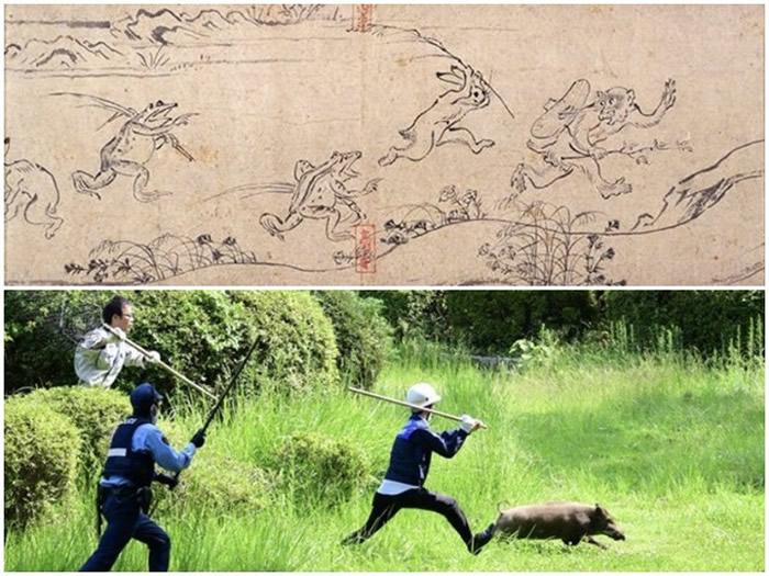 日本福冈市大濠公园警察捕野猪场面激似国宝级古画《鸟兽戏画》
