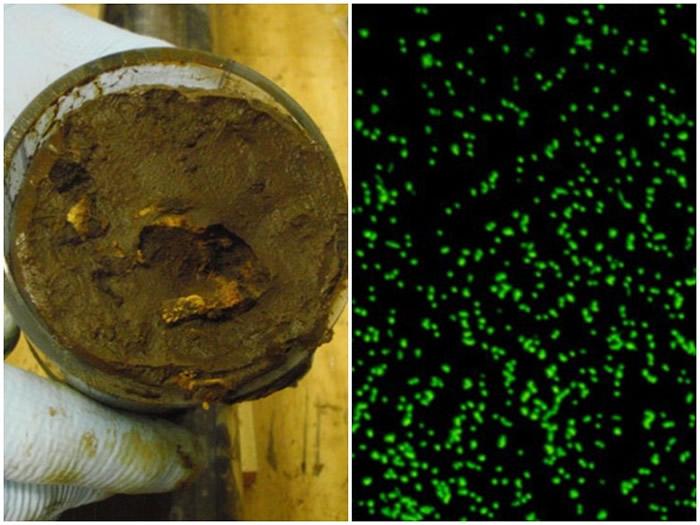 """海底深处泥土中发现存在1.015亿年的史前微生物 实验室内成功将之""""唤醒"""""""