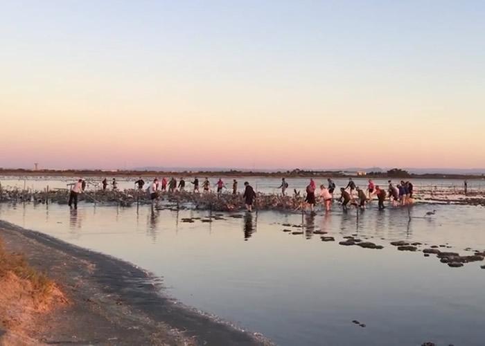 法国南部阿尔勒迎来红鹳群聚集繁殖季 逾5万只红鹳齐聚盐湖湿地上