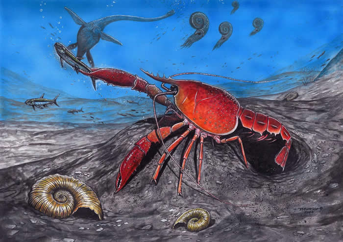 巴西古生物学家在南极发现新型淡水小龙虾化石