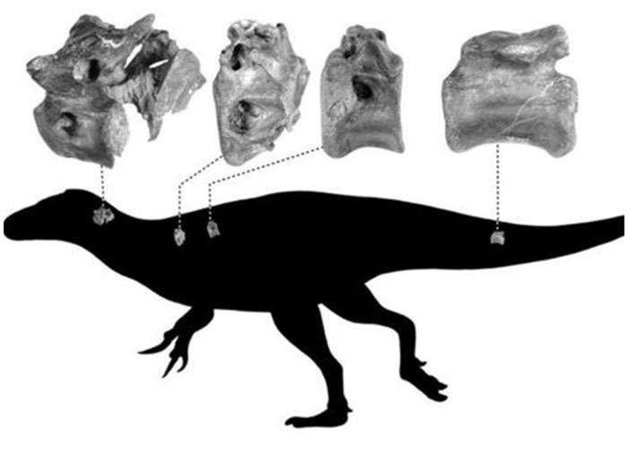 英国怀特岛出土与暴龙同属兽脚亚目恐龙的新物