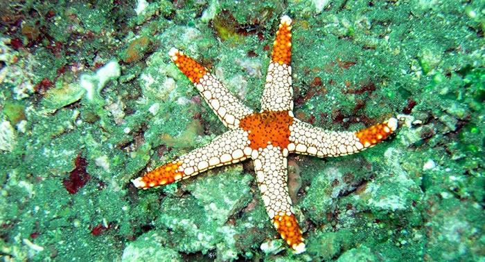 厄瓜多尔环境部:科学家在加拉帕戈斯群岛发现30种全新的海洋无脊椎动物