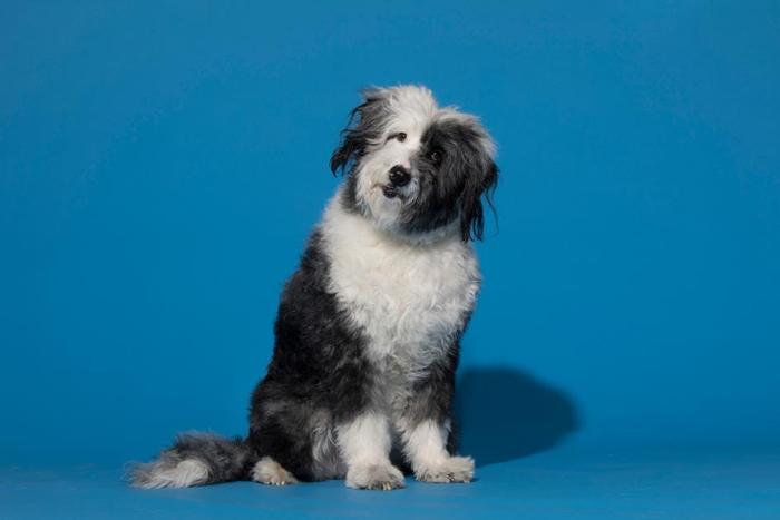 狗已经和人类一起演化了1万年,对人类的情绪特别敏感。 PHOTOGRAPH BY MARK THIESSEN, NAT GEO IMAGE COLLECTION