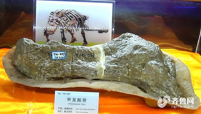 """山东诸城臧家庄化石点采集的甲龙类右侧肠骨化石正式命名""""诸城中国甲龙"""""""