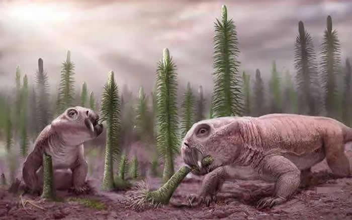 阳泉二叠纪晚期地层发现的二齿兽类化石命名为为白氏桃河兽