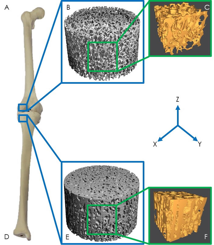 英国《新科学家》周刊网站:新研究显示恐龙之所以体型惊人是因为其骨骼特质