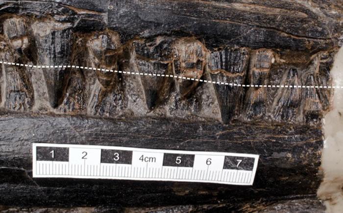 2.4亿年前化石揭示大型海洋食肉爬行动物最后的晚餐