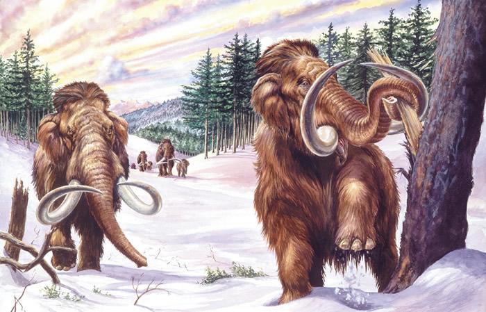 """猛犸还活着?俄罗斯当地人不时传出""""目击猛犸象""""的故事"""