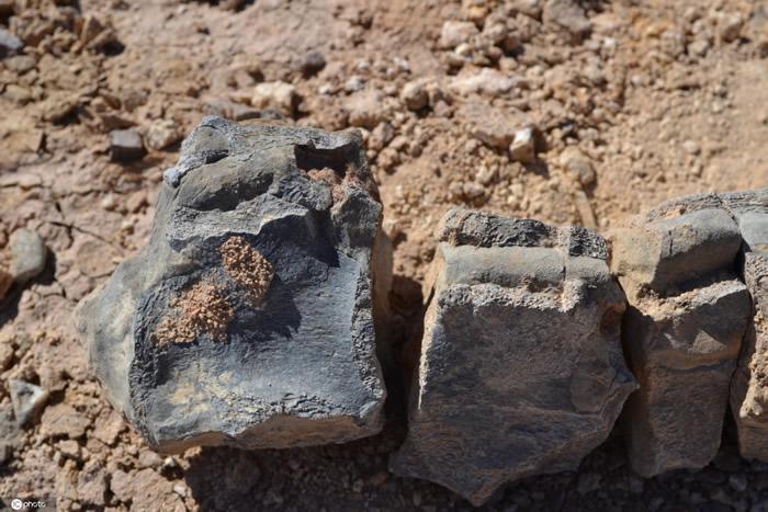 智利大学研究人员确认两种在阿塔卡马沙漠发现