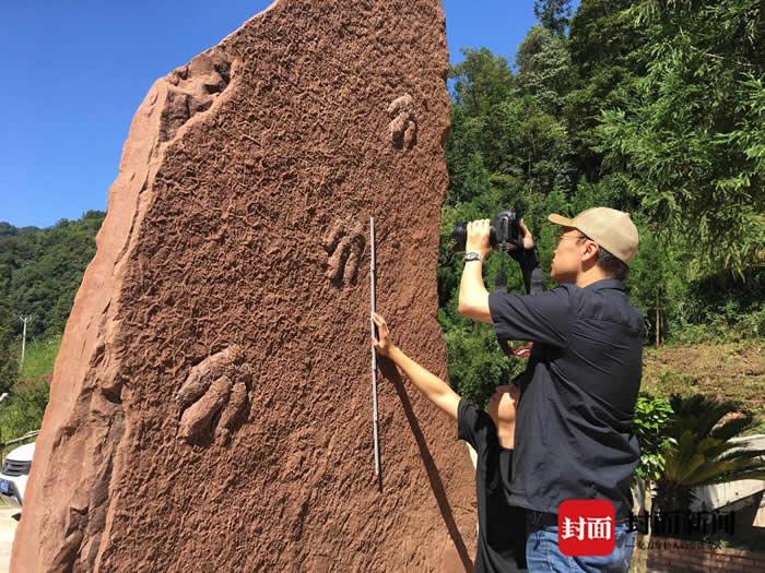四川省泸州市古蔺县再发现一组白垩纪时期恐龙足迹化石