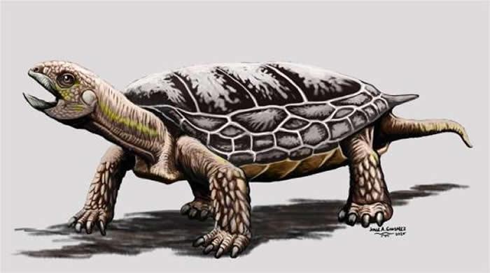2亿年前乌龟虽然已经形成龟壳 但不会将头或者四肢缩进龟壳中