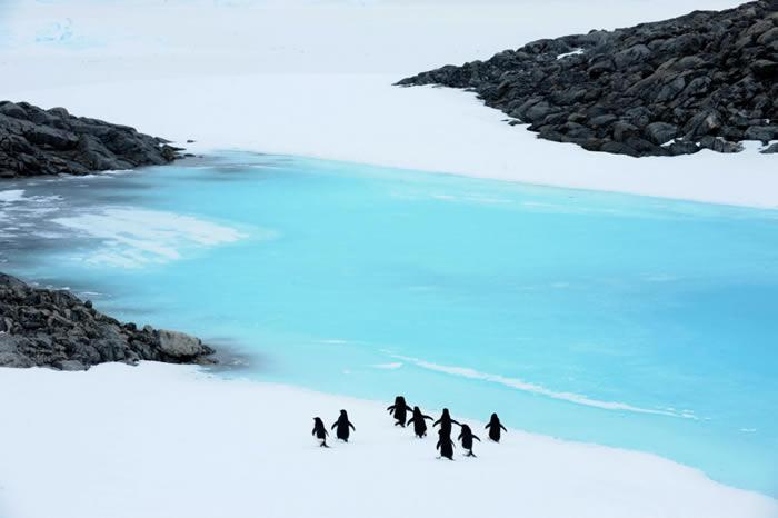 企鹅的祖先2,200万年前首先出现在澳洲、新西兰海岸 随着洋流旅行最终才到南极
