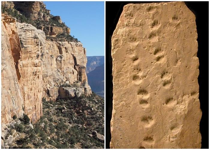 美国亚利桑那州大峡谷国家公园巨大岩石坠落 揭示3.13亿年前远古动物足迹