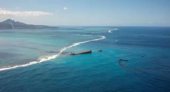 日本货轮在毛里求斯触礁重油外泄 海豚妈妈不离濒死宝宝最后母子双亡