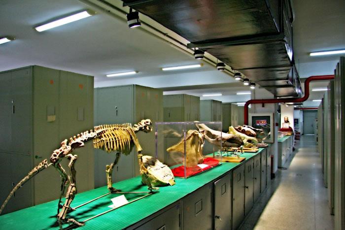 """北京动物园不远处藏着亚洲最大""""侏罗纪公园"""""""